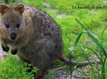 Trip in Australia: Western Australia